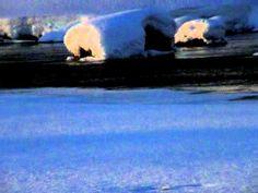 O:\Lehtonen Mikko\kirjailijan tarina kuvia\P2090263.AVI (+soittolista) saukkut uivat ja syövät kaloja