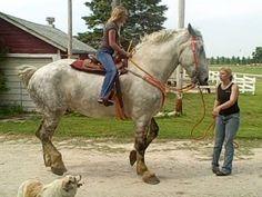 Percheron Horse 10 (63 pieces)