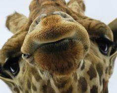lustige bilder - Bing Bilder