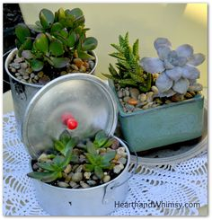 Hearth and Whimsy: Jumping on the Succulents Bandwagon