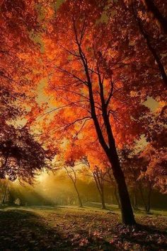 28 Amazing Sunset Forest Photography Ideas At Night Orange