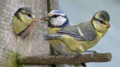JETZT BEGINNT DIE PIEP-SHOW So füttern Sie Vögel richtig