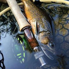 fly fishing advice #flyfishingtips
