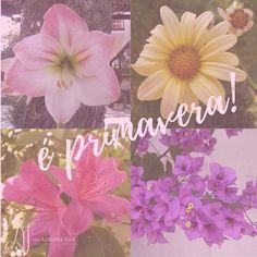 Chegou a estação mais colorida! Essas fotos são de flores do jardim da mamãe que nessa época fica todo florido!! #bomdia #primavera #setembro #beleza #natureza #brasilia