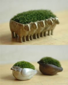 Sheep Moss trays - idea to make planters with polymer clay Small Potted Plants, Indoor Plants, Moss Garden, Garden Art, Indoor Garden, Outdoor Gardens, Plantas Indoor, Deco Nature, Cactus Y Suculentas
