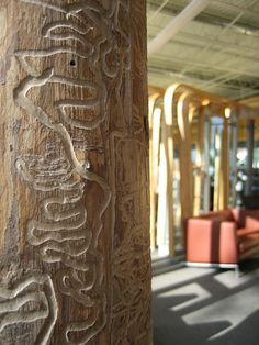 Traverwood Library Branch - Ash tree up close and the damage done by the Emerald Ash Borer