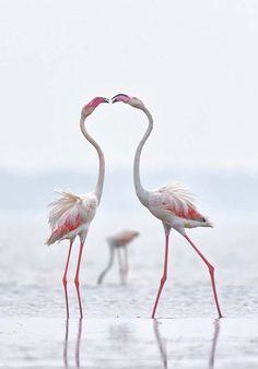 nice birds                                                                                                                                                                                 More
