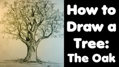 how to draw an  Oak tree. video lags on a bit but it turns out really great when finished!