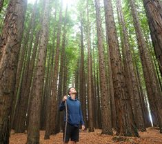 East Warburton Redwood Forest