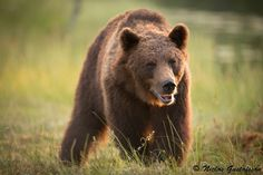 Back Off by Niclas G on 500px