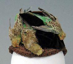 Bonnet : 1890 : - With dead, stuffed parkeets!  Metropolitan Museum of Art