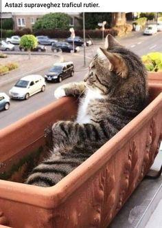 site de întâlnire cu pisică