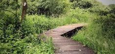 Natures Path, Beautiful Places To Travel, Staycation, Walkway, Day Trip, Places To Go, Hiking, Country Roads, Explore