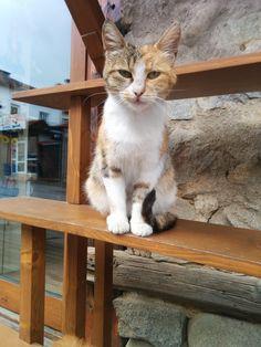Random stray cats on the streets of Bansko - Bulgaria http://ift.tt/2gFayad