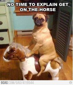 Ha! I see a picture in of Tyson riding Sally in the near future... oh how he will hate us.