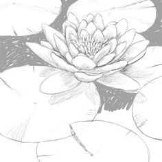 Flower Drawing Are you looking for a tutorial on How to draw a Lily Pad? here at the Drawing Factory you'll find a complete, step by step guide to achieve your drawing goal and much more! Lily Pad Drawing, Lilies Drawing, Plant Drawing, Painting & Drawing, Drawing Step, Pencil Drawings, Art Drawings, Flower Drawings, Flower Sketches