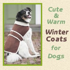 Cute and Warm Winter Coats for Dogs