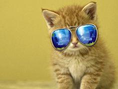 Cool Kitten in Sunnys xHD Wallpaper http://www.mobdecor.com/b2b/wallpaper/219321_cool_kitten_in_sunnys