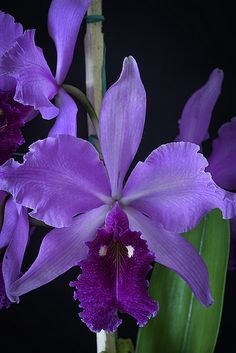 Best Photo purple Orchids Strategies If you are new to orchids , don't be frightened of them. Many orchids can be an easy task to grow