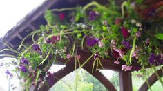Lytch gate garland of weld and clematis by the Flower Garden at Stokesay Court