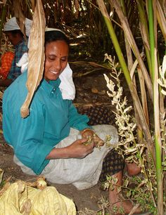 Spice garden worker in Kerala