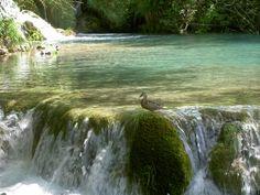 Croazia 2007  Plitvice anitra
