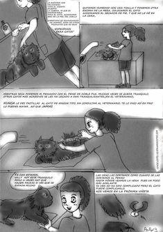 ▷ Cómo es la peluquería felina o bañar un gato ✔️