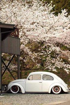 Inspiración white: Classic Beetle