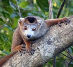 sit madagascar biodiversity and natural resource management