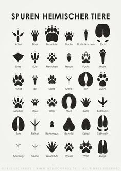 "Animal tracks, infographic from the ""Lily Lux Notebook"", illustration © 2011 Iris L .- Animal tracks, infographic from the ""Lily Lux Notebook"", illustration © 2011 Iris Luckhaus Outdoor Survival, Survival Tips, Survival Skills, Bushcraft Skills, Iris, Animal Tracks, House Illustration, Illustrations Poster, Family Illustration"