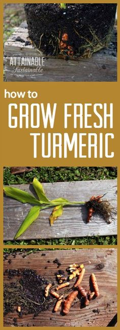 How to Grow Turmeric + Turmeric Recipes