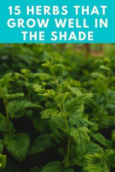 Love Garden, Lawn And Garden, Garden Ideas, Shade Garden Plants, Garden Planters, Container Gardening, Gardening Tips, Hanging Herbs, Shade Flowers