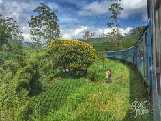 Découvrez l'itinéraire et les modes de transport utilisés pour visiter le Sri Lanka en 18 jours, ainsi que tous nos conseils pour bien vous déplacer !