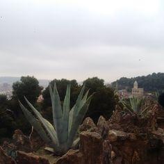 Barcelona Spain, Cactus Plants, Cacti, Cactus