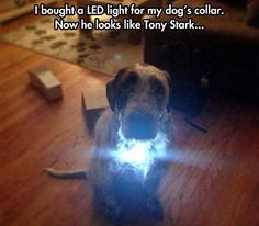 Geek buys LED collar for dog, turns him into a Tony Stark wannabe.