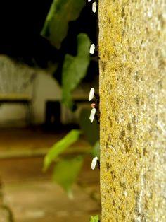 Hormigas en gran movimiento. Anticipando lluvia o tormenta, se dice por acà