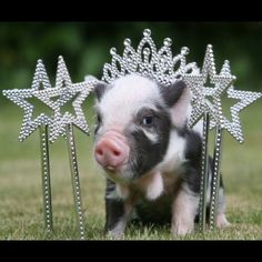 🐷Hi I'm Ape🐷 🛍Shop my closet anytime for great deals🎀ALL prices are negotiable 👍Feel free to make an offer on anything I post. Save💰Bundle 2 or more items for 20% off. All my items are NWT or in excellent pre--💗 condition. I'm downsizing and only have room for the things I truly 💗 and can truly fit into so I have lots of goodies to list. I 💗posh because it gives me the chance to sell and replenish at the same time PS I 💗 pigs 🐷 & rescue animals🐦😻 Meet the Posher Other