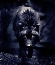 #Wolves