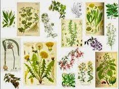 Las 230 plantas medicinales más efectivas y sus usos..