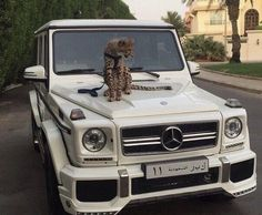 auto, luxus und mercedes Bild - You are in the right place about consolidation Loans Here we offer y Mercedes Auto, Mercedes G Wagon, Mercedes Electric, Fancy Cars, Cool Cars, My Dream Car, Dream Cars, Cat Tiger, Srt8 Jeep
