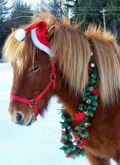 Country Christmas pony for Colton Christmas Horses, Christmas Animals, Country Christmas, Christmas Pictures, Winter Christmas, Christmas Time, Merry Christmas, Christmas Pets, Christmas Costumes