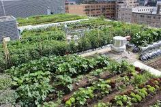Image result for csa farm