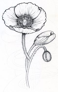 1000+ images about Ornamentos on Pinterest | Drawings, Poppies and Butterfly drawing