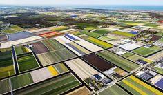 Tulipanes en Holanda: El jardín de Europa   Fotografía   EL PAÍS