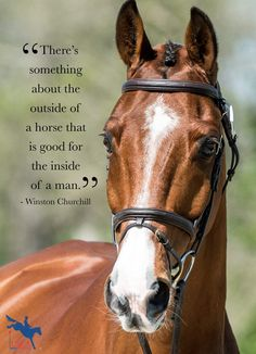 Cute Horse Quotes, Inspirational Horse Quotes, Horse Riding Quotes, Cute Horses, Horse Love, Animal Quotes, Motivational Quotes, Equine Quotes, Equestrian Quotes