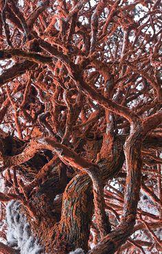 Point Lobos Red Alga   Flickr: Intercambio de fotos