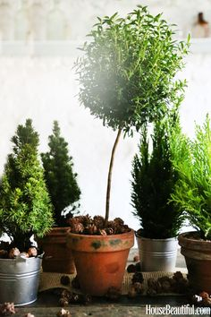 """""""Plan ahead to locate mini trees and topiaries from your local florist or garden center.""""  - Veranda.com"""