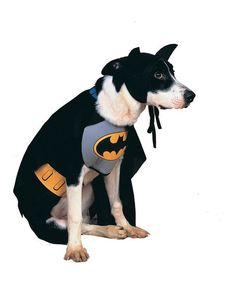 Rubies Batman Classic Pet Costume | Best Price and Reviews | Zulily