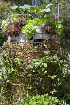 1000 images about garden on pinterest garten oder and. Black Bedroom Furniture Sets. Home Design Ideas