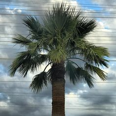 #palmtrees #clouds #cloudporn #cloudlovers #scottsdale #arizona #summer17 #summer #naturephotography #thursday #igersnewyork #igdaily #igers #instagood #instalovers #pictureoftheday #picoftheday #bestoftheday